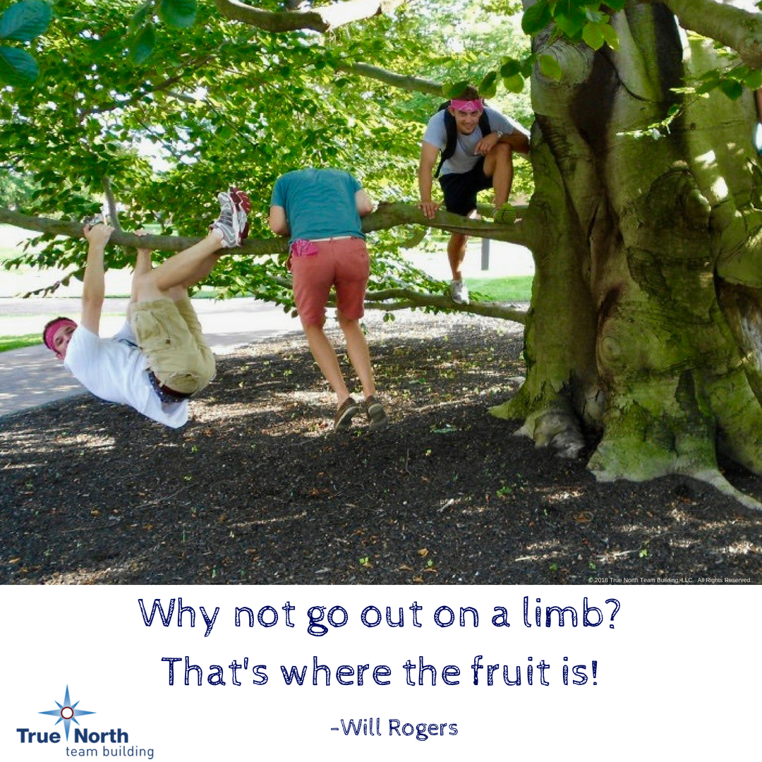 why not go out on a limb?